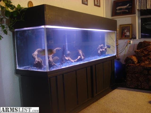 10 gallon fish tank craigslist huge aquarium for sale or for 300 gallon fish tank